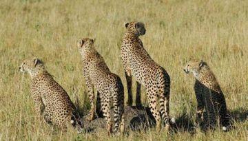The Ultimate Kenya Safari