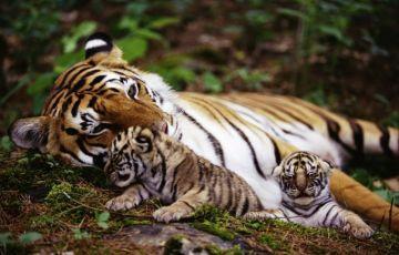 Unique Rajasthan With Wildlife Tour