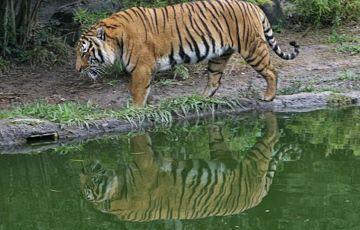 Wild Life Of Sundarban Tour