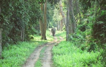 Wildlife Conservation East India Tour