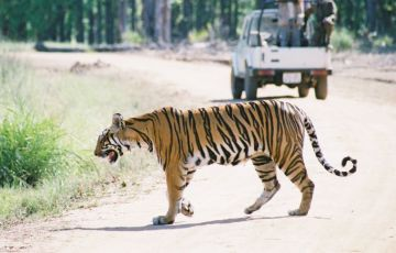 Wildlife Holiday In North India Tour