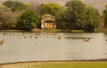 Wildlife Parks Tour