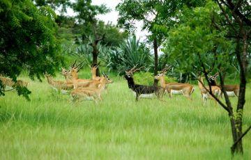 Wildlife Safari in Gujarat Tour