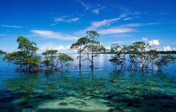 Wonderful Port Blair Tour