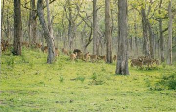 Beauty Bandipur National Park Tour
