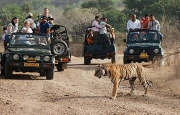 Chasing The Tigers In Kipling's Land
