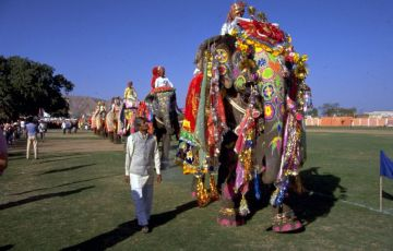 Elephant Festival and Golden Triangle Tour