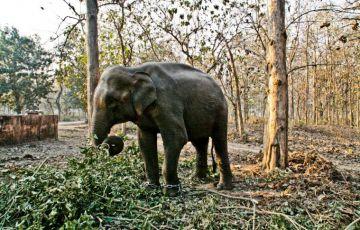 Elephant Safari in India Tour Package