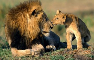 Gir Wildlife India Tour