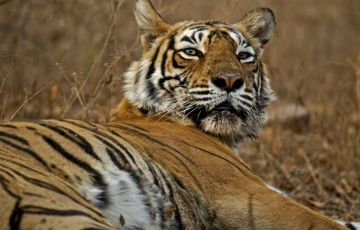 Golden Triangle with Tigers Tour
