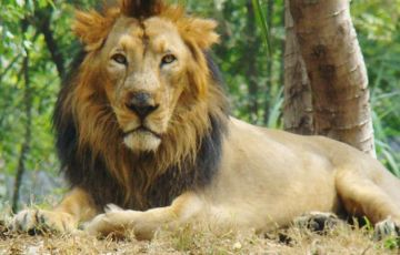 Gujarat Short Wildlife Tour