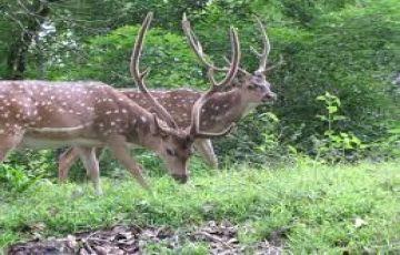 Historical and Wild Karnataka
