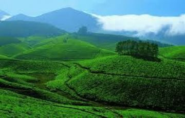 Honeymoon Munnar Tour