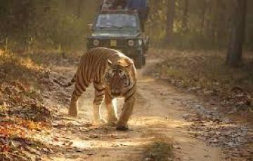 Indian Tiger Tour