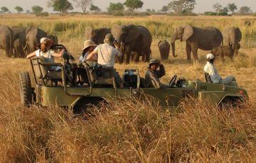 Indian Wildlife Safari Tour