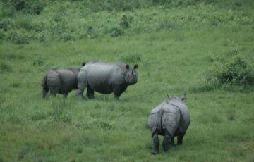 Jungle Safari Dooars Tour