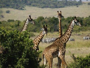 Kenya tour