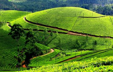 Kerala Gods Own Country India