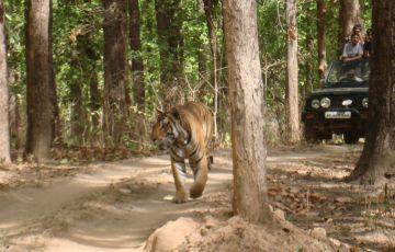 Luxury Tiger Safari Tour