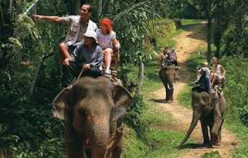 TPJ-55 - 3 Days Periyar Tour with Treehouse