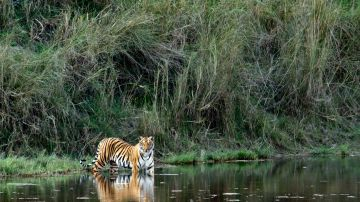 THE ABODE OF THE CLOUD KAZIRANGA TOUR PACKAGE 3 NIGHTS AND 4