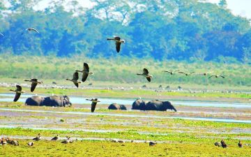 WILDLIFE TOUR IN NORTH EAST TRIANGLE 4 NIGHTS AND 5 DAYS