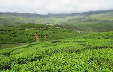 TPJ-66 Essence of Kerala