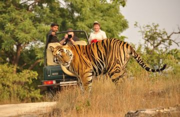 Tiger Trail Corbett 03 Days Luxury Package