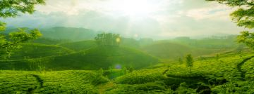 MESMERIZING KERALA TOUR PACKAGE 3 NIGHTS AND 4 DAYS