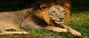 GIR NATIONAL PARK WEEKEND TRIP 2 NIGHTS AND 3 DAYS