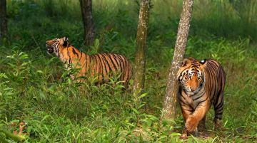 LAND OF ROYAL BENGAL TIGER TOUR PACKAGE 2 NIGHTS AND 3 DAYS