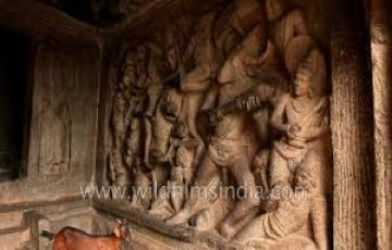 TPJ-80 Chennai with Temple Tour