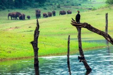 WAYANAD TOUR WITH VYTHIRI TREE HOUSE 2 NIGHTS AND 3 DAYS