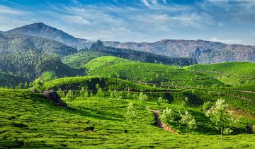 Splendid Munnar Kerala Tour Package