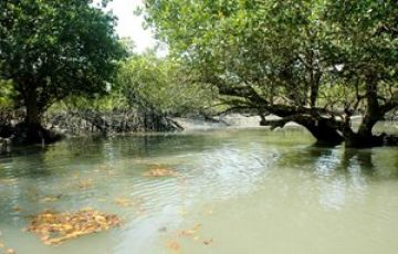 THE MESMERIZING WOODS OF SUNDERBAN TOUR PACKAGE 3 NIGHTS AND
