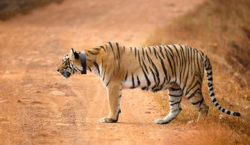 WILDLIFE TADOBA NATIONAL PARK TOUR PACKAGE 3 NIGHTS AND 4 DA