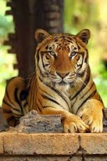 DAZZLE WITH SUNDERBAN NATIONAL PARK TOUR PACKAGE 3 NIGHTS AN