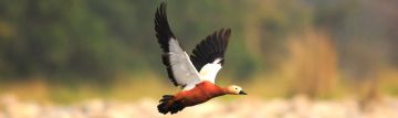 WILDLIFE TOUR WITH NAMERI NATIONAL PARK 3 NIGHTS AND 4 DAYS