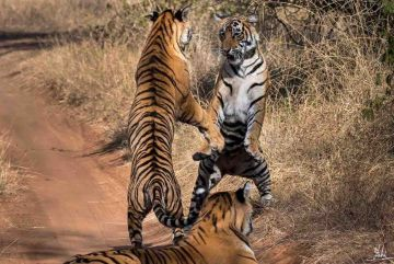 RANTHAMBORE WEEKEND TOUR PACKAGE 2 NIGHTS AND 3 DAYS