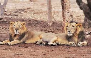 TPJ-90 Short Escape to Gir