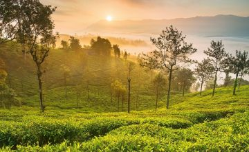 A Pristine Ooty Tour Package