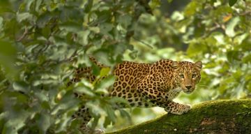 WILDLIFE TOUR PACKAGE TADOBA 2 NIGHTS AND 3 DAYS