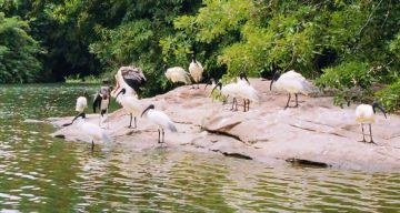THATTEKAD TOUR FROM COCHIN 2 NIGHTS AND 3 DAYS
