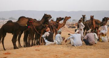 PUSHKAR WEEKEND TOUR PACKAGE 2 NIGHTS AND 3 DAYS