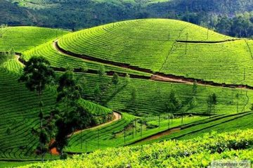 Bangalore -Mysore-Ooty Holiday package