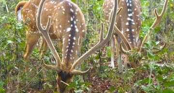 NAGARHOLE WEAGEKEND TOUR PACKAGE 2  NIGHTS AND 3 DAYS