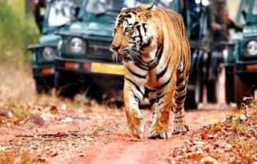 RANTHAMBORE NATIONAL PARK TOUR PACKAGE 2 NIGHTS AND 3 DAYS