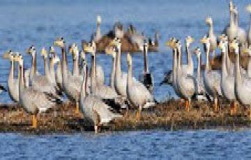 Sultanpur Bird Sanctuary  Weekend Getaway from Delhi