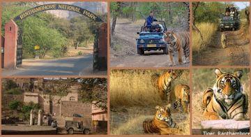 Ranthambore Tiger Safari Tour