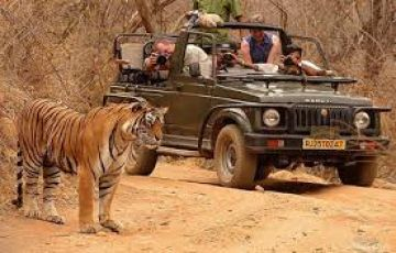 PENCH WILDLIFE PACKAGE